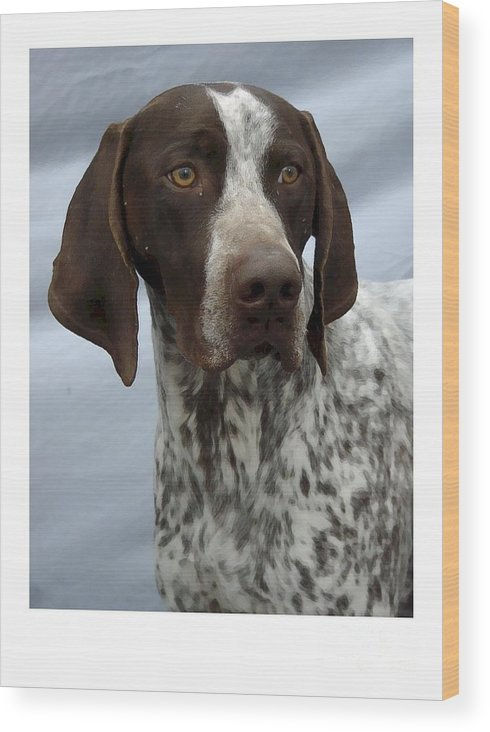 German Shorthaired Pointer Digital Art Wood Print featuring the digital art German Shorthaired Pointer 442 by Larry Matthews