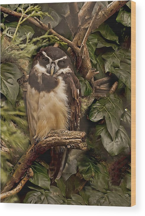 Artistic Wood Print featuring the photograph Owl by Gouzel -