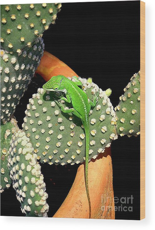 Nature Wood Print featuring the photograph Anole Hanging Out With Cactus by Lucyna A M Green