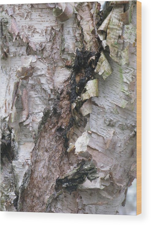 Trees Wood Print featuring the digital art Bark Of The Birch by Donna Thomas