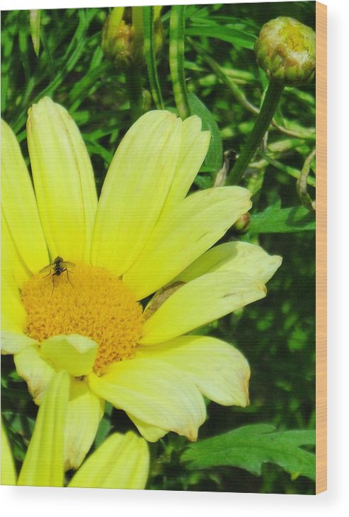 Flower Wood Print featuring the photograph Beautiful by Peter Mowry