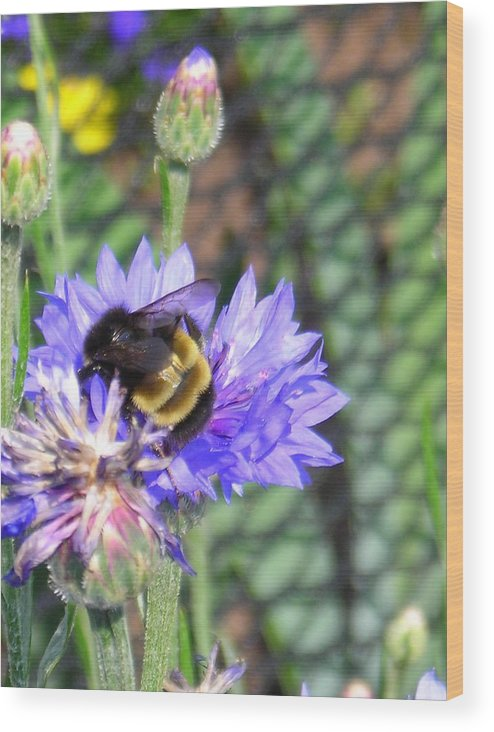 Bee Wood Print featuring the photograph Bee Bee by Peter Mowry