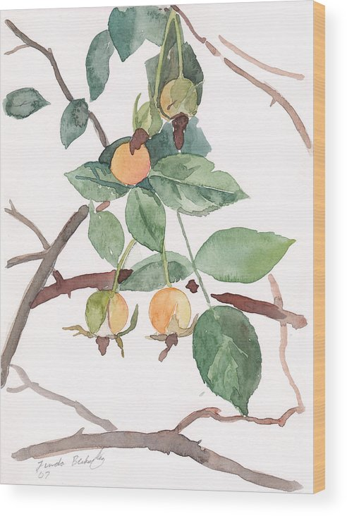 Paintings Wood Print featuring the painting Berries In Pink Light by Linda Berkowitz