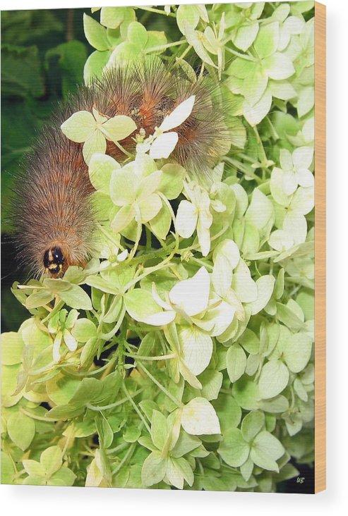 Caterpillar Wood Print featuring the photograph Caterpillar by Will Borden