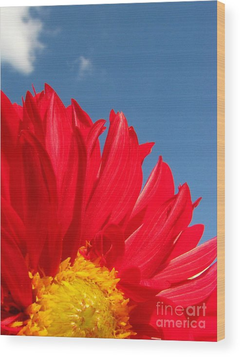 Dahlia Wood Print featuring the photograph Dahlia by Amanda Barcon