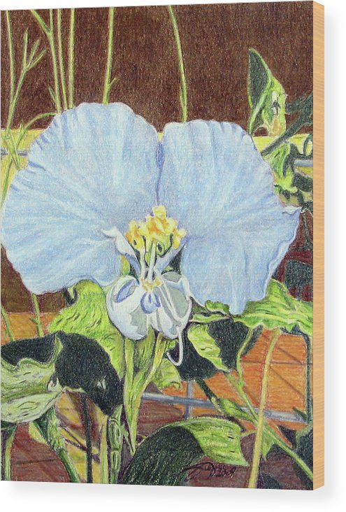 Fuqua - Artwork Wood Print featuring the drawing Day Flower by Beverly Fuqua