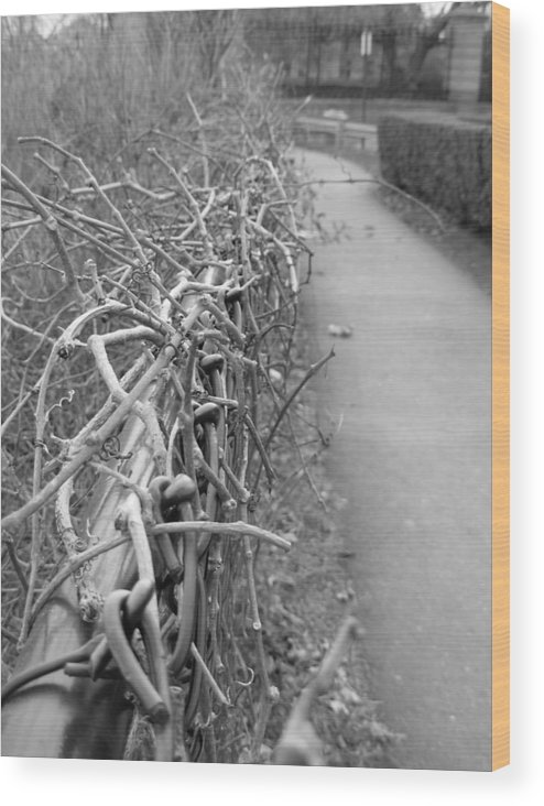 Black And White Wood Print featuring the photograph Down To The Wire by Amanda Vouglas