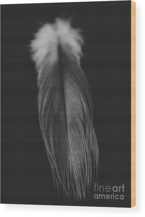 Adrian-deleon Wood Print featuring the photograph Feather In Black And White by Adrian DeLeon