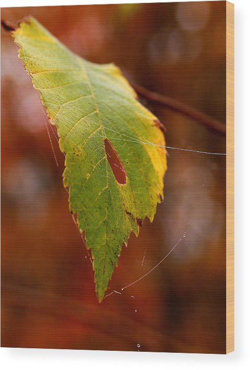 Leaves Wood Print featuring the photograph Green Silk by Linda McRae