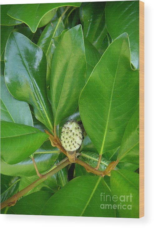 Nature Wood Print featuring the photograph Magnolia Pod by Lucyna A M Green
