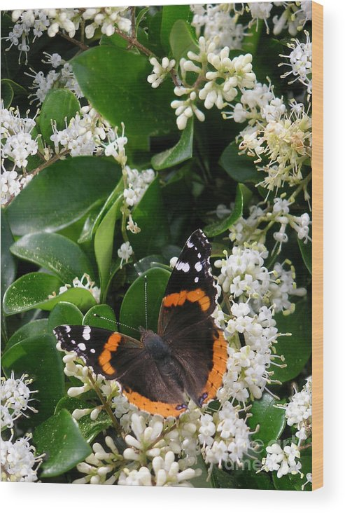 Nature Wood Print featuring the photograph Nature In The Wild - A Sweet Stop by Lucyna A M Green