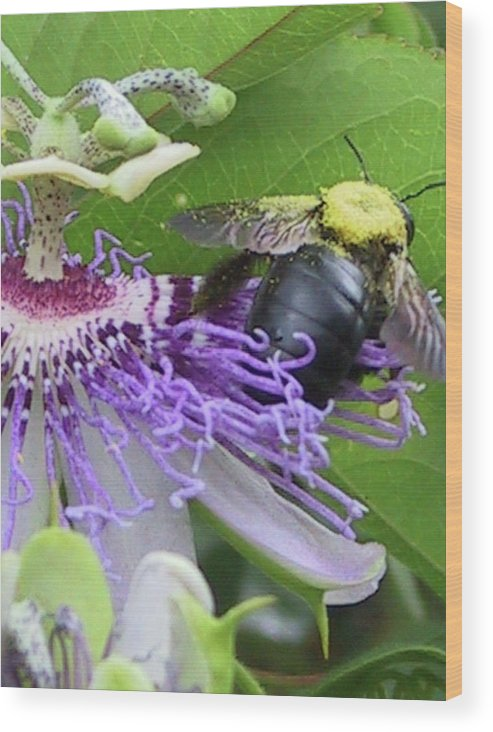 Flowers Wood Print featuring the photograph On To The Next by Michele Caporaso