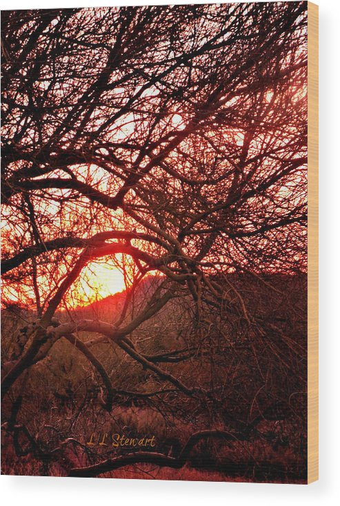 Arizona Wood Print featuring the photograph Palo Verde Sunset by L L Stewart