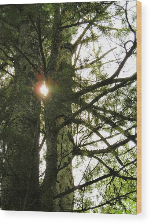 Trees Wood Print featuring the photograph Peek A Boo by Peter Mowry