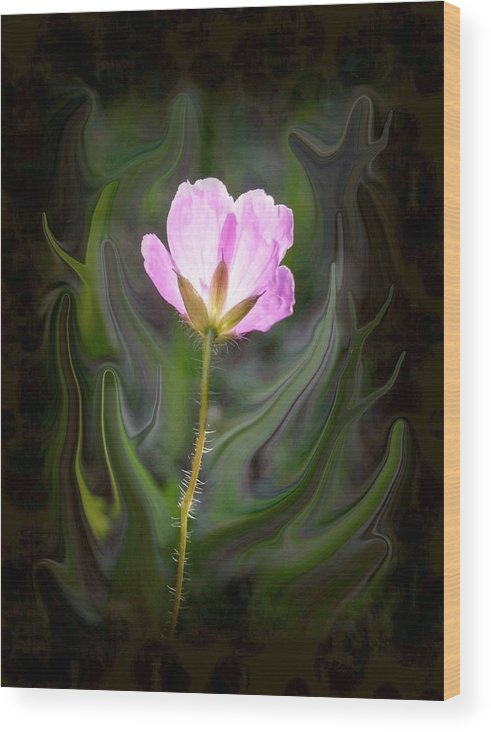 Pink Flower Wood Print featuring the photograph Pink Flower by Jim Darnall