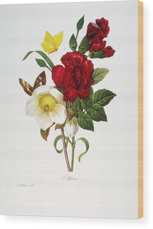 1833 Wood Print featuring the photograph Redoute: Hellebore, 1833 by Granger