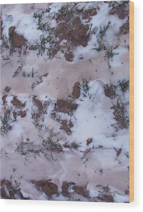 Interesting Greeting Cards Wood Print featuring the photograph Reversing The Roles - Soil Dusting A Crispy Snow by Terrance DePietro