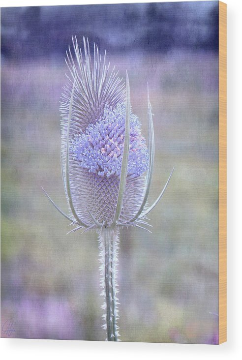 Thistle Wood Print featuring the digital art Stand Alone by Margaret Hormann Bfa