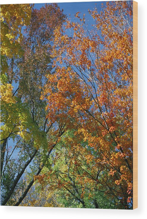 Trees Wood Print featuring the photograph Study For Autumn 2 by Steve Parrott