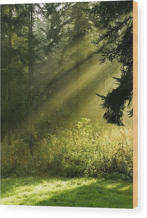 Nature Wood Print featuring the photograph Sunlight by Daniel Csoka