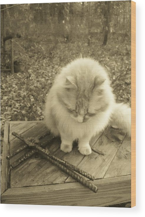 Cat Wood Print featuring the photograph Ted In Sepia Tone by Deborah Montana