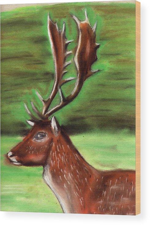 Deer Wood Print featuring the drawing The Irish Deer by Alan Hogan