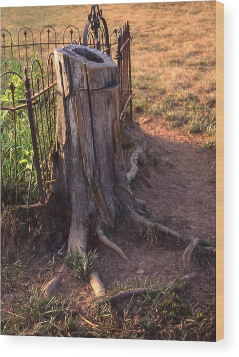 Wood Print featuring the photograph Where The Cows Can't Reach by Curtis J Neeley Jr
