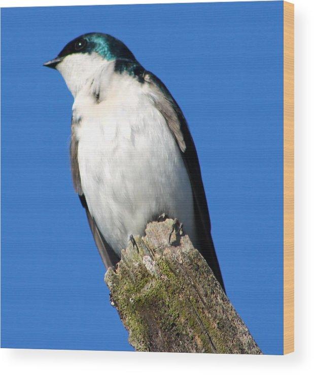Bird Wood Print featuring the photograph Little Bird by Matthew Modena