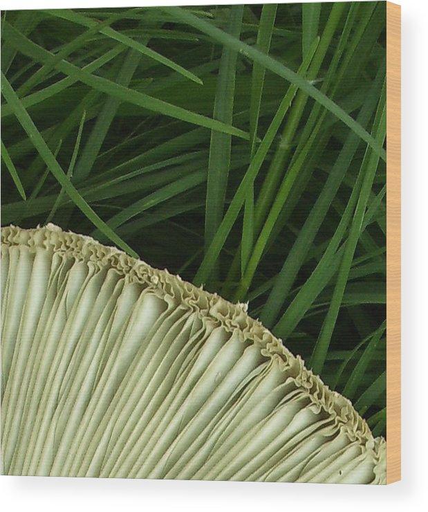 Mushroom Wood Print featuring the photograph Quarter by Lindsay Clark