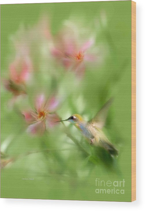 Garden Hummingbird Floral Green Tropical Oleander Wood Print featuring the photograph Little Miracles by Carolyn Staut