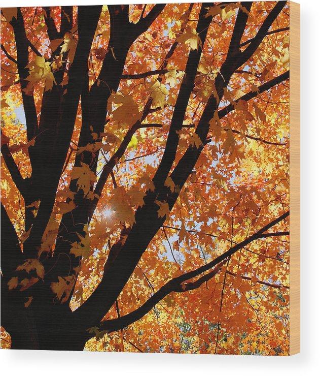 Autumn Wood Print featuring the photograph Autumn Beauty by Kim Hojnacki