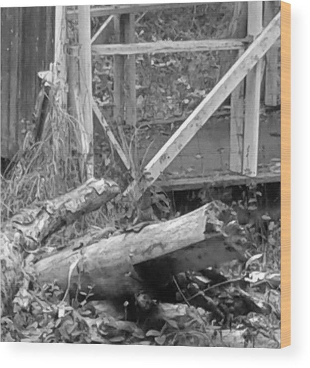 Tree Wood Print featuring the photograph Broken by Marge Cari