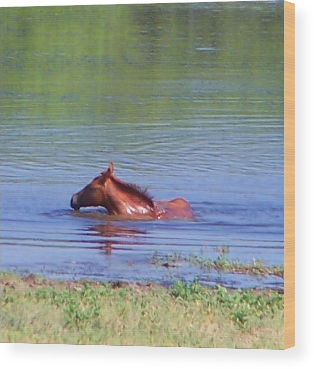 Horses Wood Print featuring the photograph Look Mum I Can Swim. by Lilly King