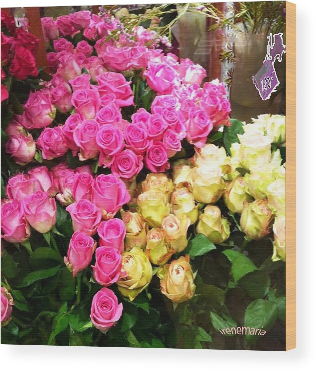 Roses Wood Print featuring the photograph Rose Photoposter by Irenemaria