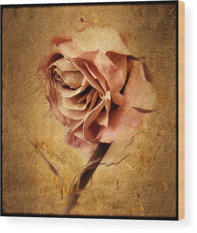 Flower Wood Print featuring the photograph Textured Rose by Jessica Jenney