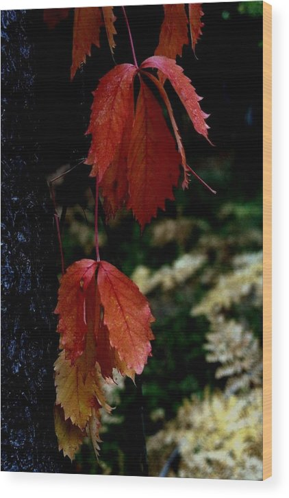 Fall Wood Print featuring the photograph Autumn by Alfredo Martinez