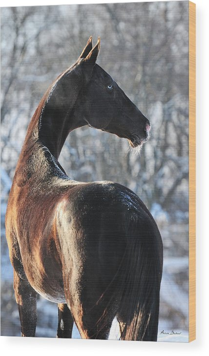 Horses Wood Print featuring the photograph Tokhtamysh by Artur Baboev