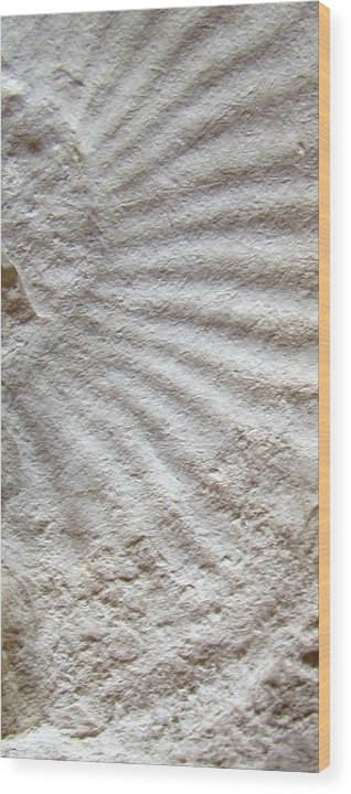 Fossil Wood Print featuring the photograph Fossil Four by Ana Villaronga