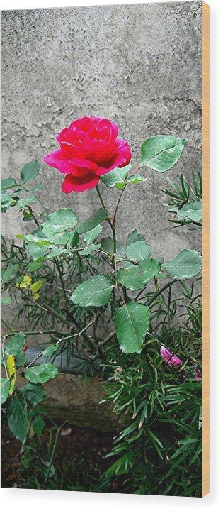 Rose Wood Print featuring the photograph Pink On Grey Stone by Caroline Urbania Naeem