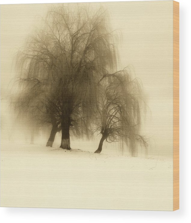 Tree Wood Print featuring the photograph Frozen Trees by Catalin Palosanu