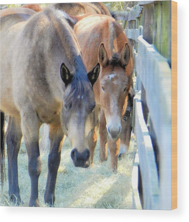 Horse Wood Print featuring the photograph In The Country... by Melody McCoy