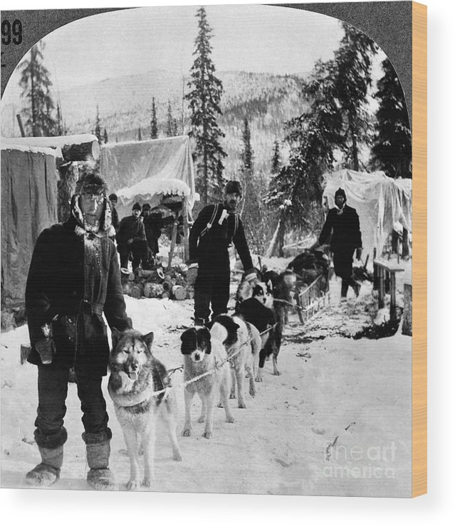 1900 Wood Print featuring the photograph Alaskan Dog Sled, C1900 by Granger