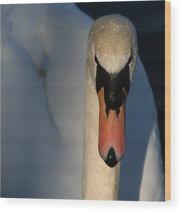 Swan Wood Print featuring the photograph Brooklyn Swan by Jason Hochman