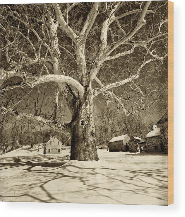 Sycamore Tree Wood Print featuring the photograph Lafayette Headquarters by Jack Paolini