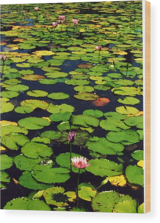 Water Lilies Water Wood Print featuring the photograph Wailea Water Lilies by Jennifer Ott