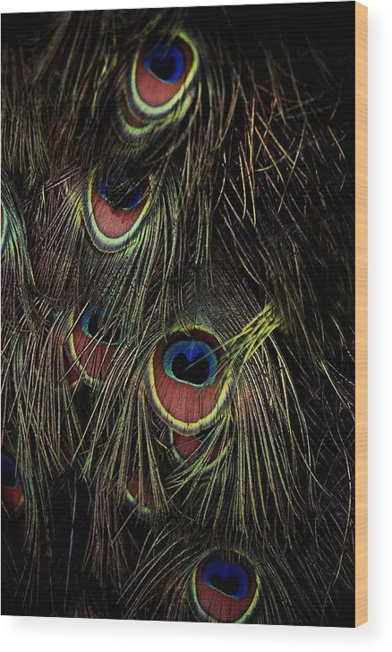 Peacock Wood Print featuring the photograph Eyes by Alfredo Martinez