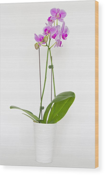 Flowers Wood Print featuring the photograph Orchid by Roni Chastain
