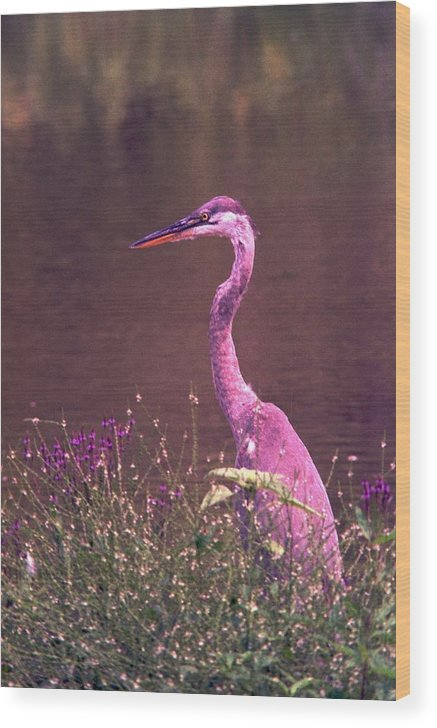 Great Blue Heron Wood Print featuring the photograph 080706-12 by Mike Davis