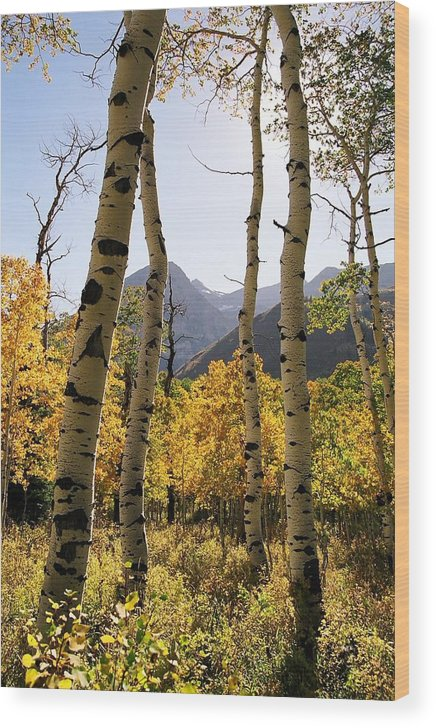 Trees Wood Print featuring the photograph 4 Aspens by Caroline Clark