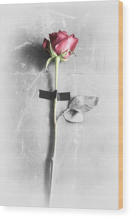 One Wood Print featuring the photograph Single Rose Stem Taped On White Background by Di Kerpan